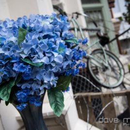 Blue Baptisias